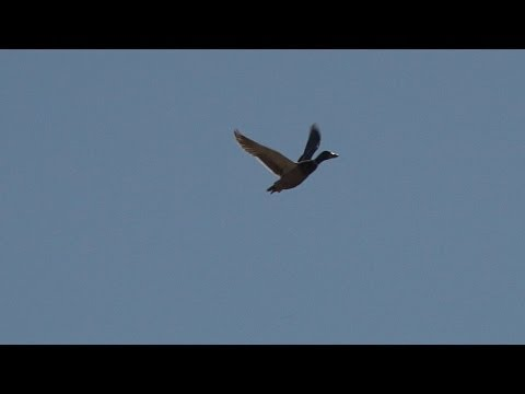 How to get duck flying fit, with George Digweed