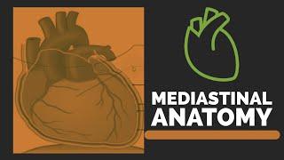 Mediastinum | Mediastinum Anatomy