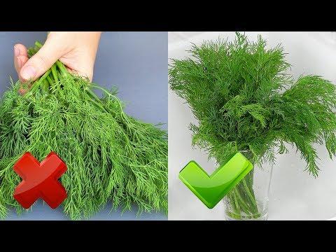 Зелень остается СВЕЖЕЙ до 2-х месяцев! Рецепты из укропа  УКРОПНАЯ ЗАВИСИМОСТЬ