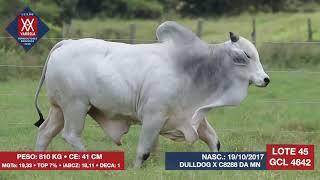Gatinho varrela