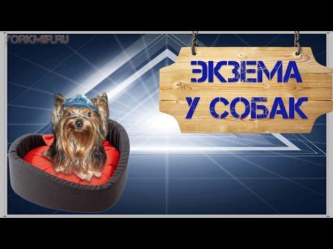 Экзема у собак | Мокнущая и сухая экзема | Лечение.