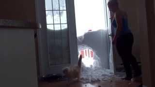 Смотреть онлайн Кот прыгает сквозь снежную стену