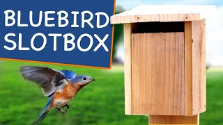 How To Build A Bluebird House With Slot Entry🐥! Not Your Grandpas Bird House Plans For Bluebirds!