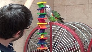 Parrots Kili & Truman Moving to New House