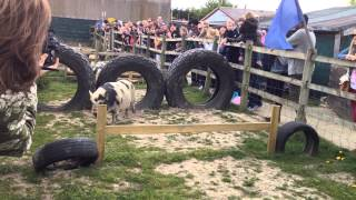 preview picture of video 'Pig Racing at The Hounslow Urban Farm near Feltham, West London'