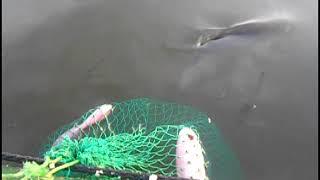 Озеро мыркай челябинская область рыбалка