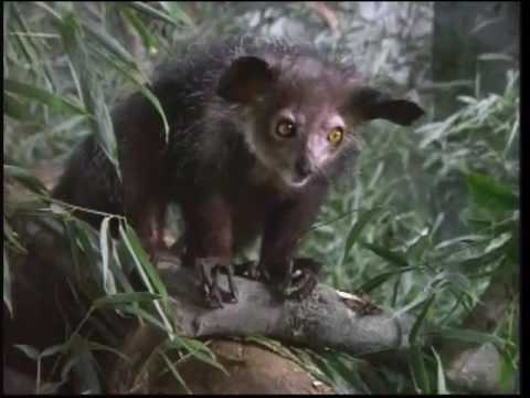 zoboomafoo superclaw complete episode part 2 2