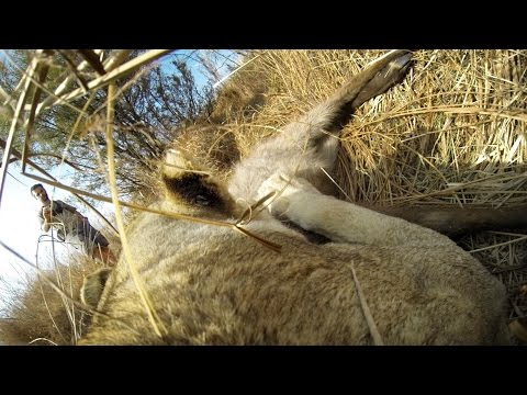 This Is What Hunting Looks Like From A Lioness' Point Of View