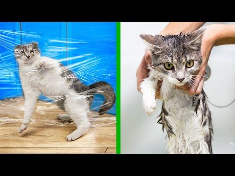 14 Truques Para Gatos!