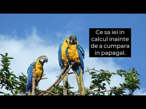 nematod de papagal)