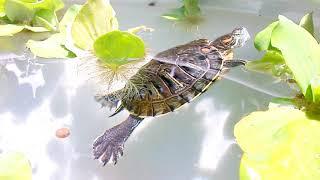 Nhà mới của rùa (turtle's new home)
