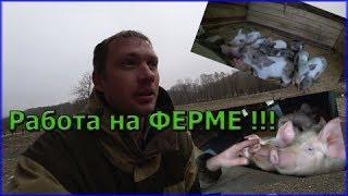 Работа на ферме // Крестьянское фермерское хозяйство // Прогулка по ферме