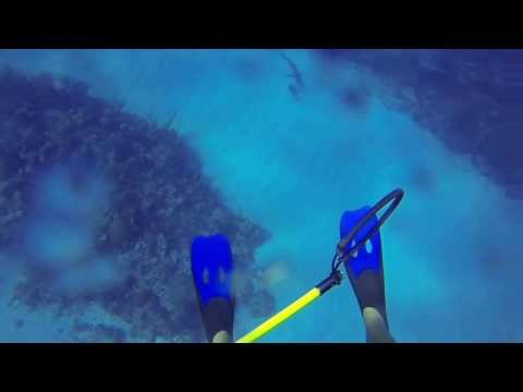 GoPro Captures Reef Diver Fighting Off A Very Angry Shark