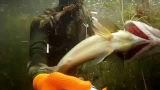 подводная охота на оз. Балхаш