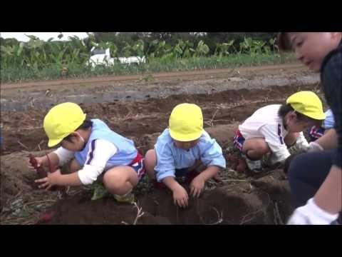 笠間 友部 ともべ幼稚園 子育て情報「いも掘り」