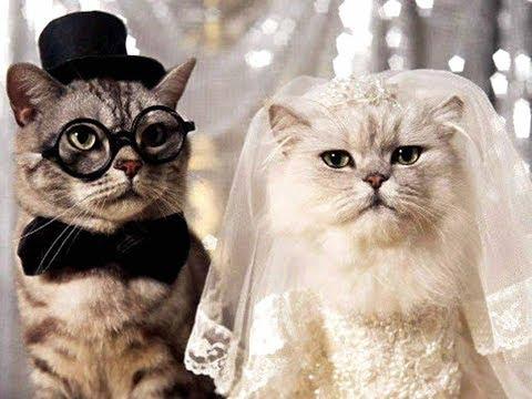 Поздравление с годовщиной (днем) свадьбы. По мотивам совместной жизни (крылатые фразы).
