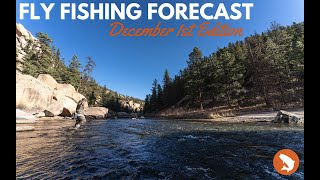 Trouts Fly Fishing Forecast | December 1st Edition