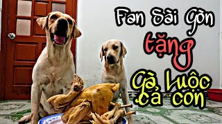 Bất ngờ Củ Cải được tặng 1 con gà luộc từ fan Sài Gòn