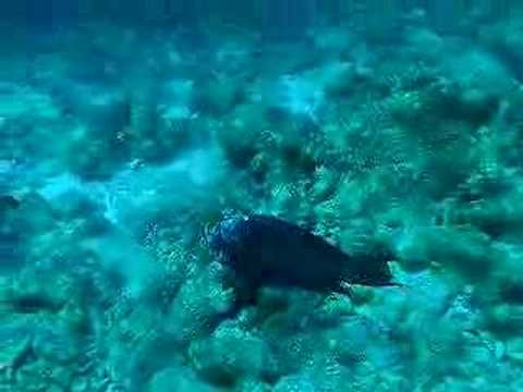 Bonaire, Bonaire,Niederländische Antillen