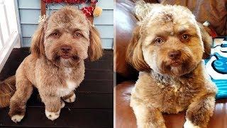 У этой собаки человеческое лицо