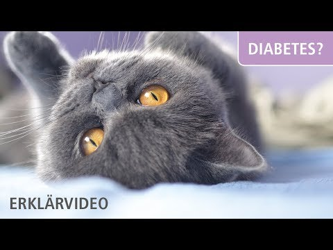 Kinder und Prävention von Diabetes mellitus