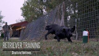 Teaching Your Gundog to Retrieve - Hunting Dog Training