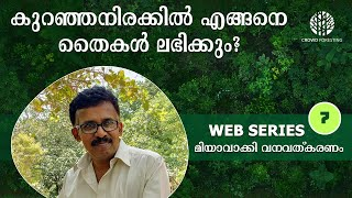 How to Source Saplings at Cheap Rates