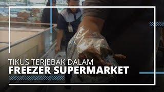 Viral di Medsos, Tikus Besar Terjebak dalam Freezer Makanan Beku di Lampung