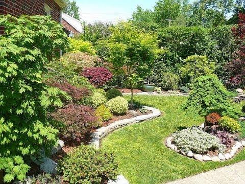 Какие деревья можно сажать возле дома