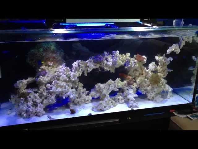 Reef Tank Update - Refugium Gone Wild!