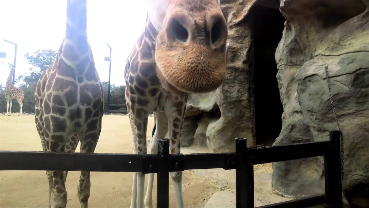 Taronga Zoo Plays With Google Glass [Video]