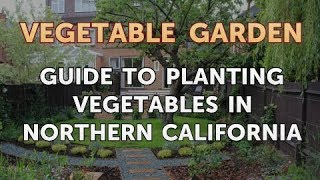 Guide to Planting Vegetables in Northern California
