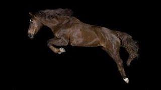 RISE [Jonas Blue Ft.Jack & Jack]   Equestrian Music Video