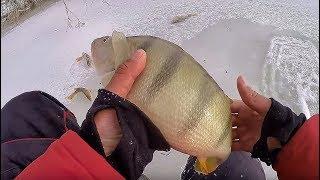 ЗА ТАКИМИ КАБАНАМИ СТОИЛО СЮДА ИДТИ!!Килограммовые окуни в корягах!!Рыбалка Щука на балансир.