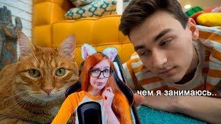Брайн Мапс общаюсь с котом через кошачий переводчик и КАТОЧКИ В CITYBATTLE