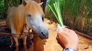 Home of the horses (Chuồng của những chú ngựa)