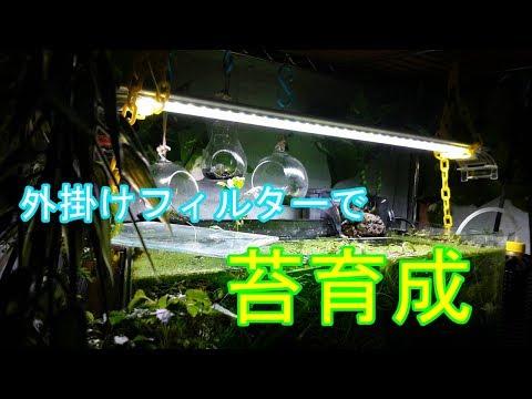 【苔】水槽周りで苔育成 #3 外掛けフィルターにホウオウゴケ