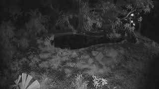 Tiger Cam 2