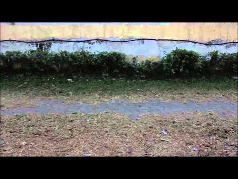 Sea buckthorn langis complex oblepikha siberica mga tip para sa buhok natura siberica review
