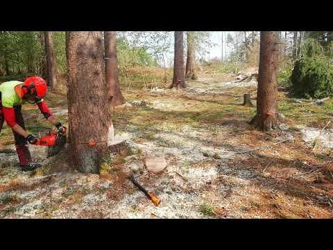 Ťažba dreva  Husqvarna 560 xpg