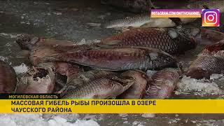 Что стало причиной мора рыбы на водоёме в Чаусском районе?