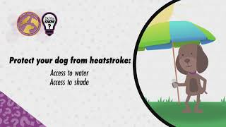 Protect Your Pet From Summer Heat!