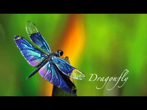Dragonfly - a piano instrumental piece imagining a dragonfly dancing on the water.