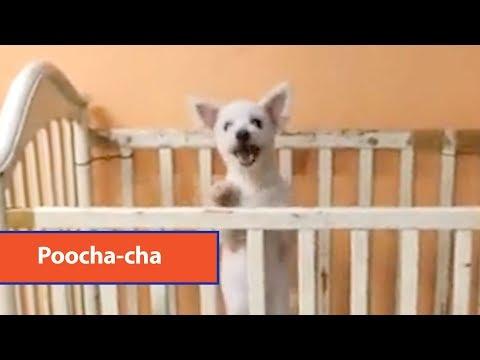 Dog Dances Cha Cha In Crib