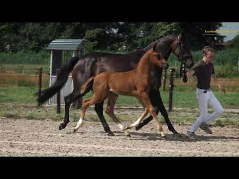 Pegasus BSW (v. Jazz)