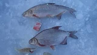 Рыбалка зимняя в липецкой области