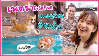 จะเป็นยังไง เมื่อเพตรามาสอนหมูอ้วน หมาพี่เป้วง Mild ว่ายน้ำครั้งแรก! 🍊ส้ม มารี x จรจัด 🍊