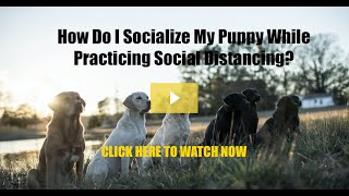 How To Socialize Your Puppy While Practicing Social Distancing