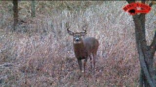 November 5 - 8 BEST Self-Filmed Illinois Deer Hunt Ever - Hunting Rutting Whitetail Bucks