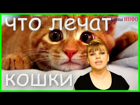 Породы лечебных кошек! Какие кошки и от чего лечат человека?